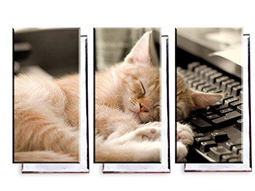 Unified Distribution Katze schläft auf Tastatur - Dreiteiler (120x80 cm) - Bilder & Kunstdrucke fertig auf Leinwand aufgespannt und in erstklassiger Druckqualität