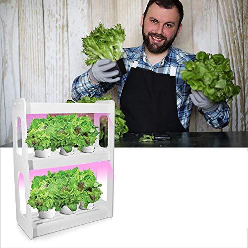 ZDYLM-Y Smart Indoor Garden, 20W Double Layer Full Spectrum LED-Wachstum-Licht mit Netzschalter-Knopf, Nicht enthalten Samen