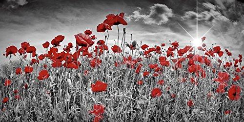 Artland Qualitätsbilder I Alu Dibond Bilder Alu Art 100 x 50 cm Botanik Blumen Mohnblume Foto Schwarz Weiß C5PM Idyllisches Mohnblumenfeld mit Sonne