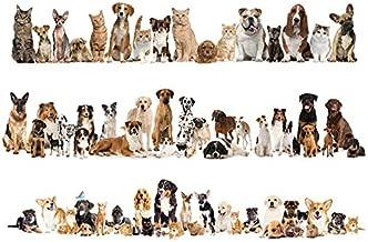 Amazon.es: vinilos perros