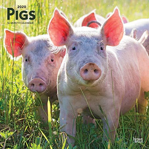 Pigs - Schweine 2020- 16-Monatskalender: Original BrownTrout-Kalender [Mehrsprachig] [Kalender] (Wall-Kalender)