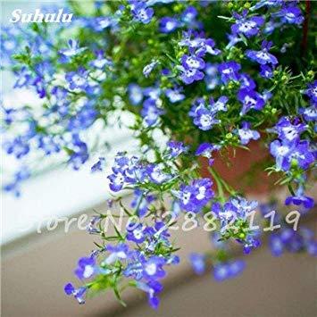 Vista 3: Bonsai White Saxifraga\