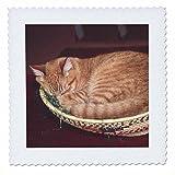 3dRose orange, Design Getigerte Katze Asleep in Einer
