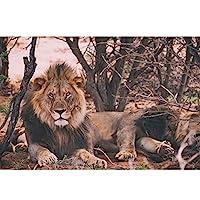 木製パズルおもちゃパズル 猛烈なライオン大人のパズル1000-6000ピースジグソーパズルシグネチャーコレクション夕暮れの夕日の眺め大人の十代の若者たちのためのアートワーク (Color : Puzzle, Size : 1500PCS)