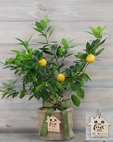 Improved Meyer Lemon Housewarming Gift Tree with Personalized Keepsake Ornament by The Magnolia Company-Cannot Ship to CA, TX, AZ, LA