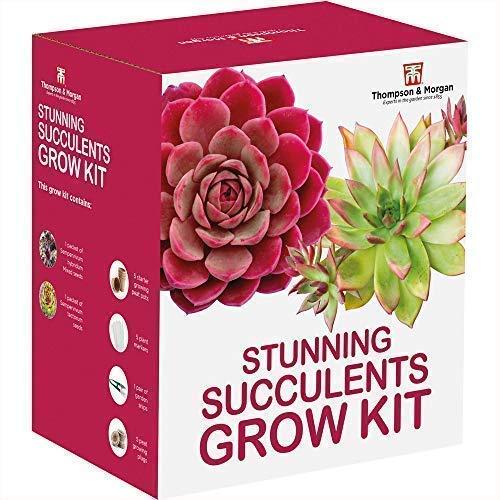 Thompson & Morgan Grow Kits Cadeau Boîtes - Plantes Succulentes