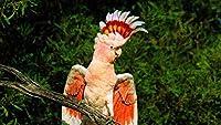 数字で描くキットDIY油絵キャンバスカラートーク大人のための家の壁の装飾初心者-オウムの羽たてがみ美しい枝座る40×50cm(フレームレス)