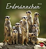 Erdmännchen Postkartenkalender - Kalender 2019