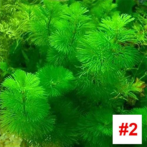 Rosepoem Aquarium Wasserpflanze Samen Aquarium Wasser Grassamen Aquarium Tempel Pflanzensamen, 1000 Teile/Paket - # 2