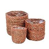 Juego de 3 cestas de algas marinas, mini maceteros para plantas suculentas, cactus, macetero redondo para plantas, cesta de almacenamiento para plantas suculentas, macetero trenzado (marrón)