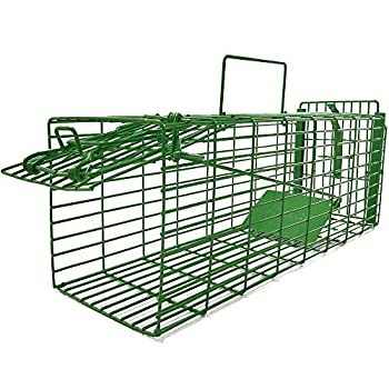Best squirel trap Reviews