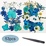 Blue 53pcs Real Dried Pressed Flowers Leaves Petals, Josisi Colorful Pressed Flowers Daisies for Art DIY Crafts-DIY Candles, Resin Jewelry, Art Nail, Pendant Crafts, Making Art Floral Decors, Make-up