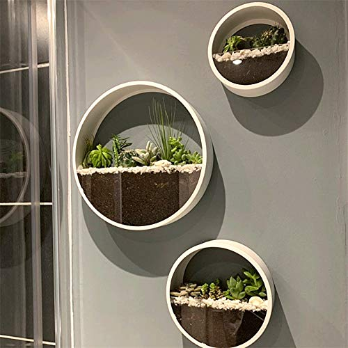 Ecosides Set of 3 Round Wall Hanging Plant Terrarium Air Plant Holder Wall Hanging Container Succulent Plant Pots in Mixed Size(White)
