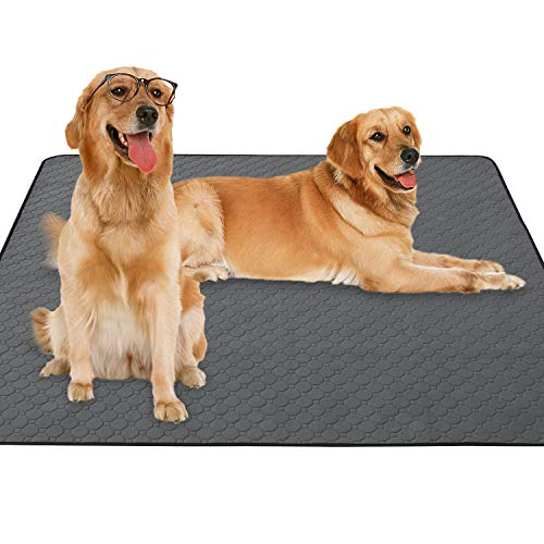 What Are the Best Dog Pee Pads?