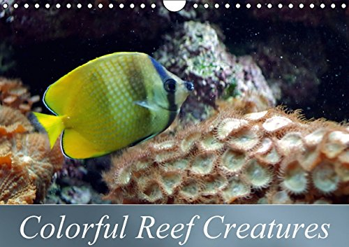 Colorful Reef Creatures (Wall Calendar perpetual DIN A4 Landscape): Tropical reefs provide a wide variety of animals and colors (Birthday calendar, 14 ... [Kalender] [Oct 23, 2014] Schumann, Bianca