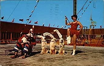 Renee's Canine Cadets at The Circus Hall of Fame Sarasota, Florida Original Vintage Postcard
