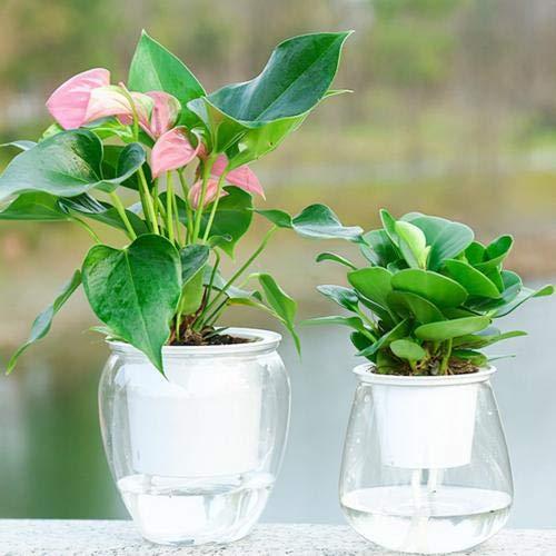 Zelf Watering Plant Flower Pot Water Container Plastic Planter Desktop Decor van het Huis Planten Bonsai Bloempot Garden Watering Gereedschap: Small