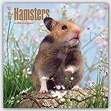 Hamsters 2016 - Hamster - 18-Monatskalender: Original BrownTrout-Kalender [Mehrsprachig] [Kalender] (Wall-Kalender)