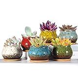 LEARJIN Succulent Pots