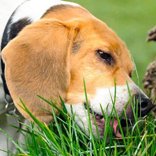 Erba per cane in miscuglio – PER CANI (Semente)