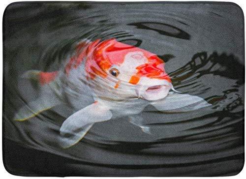 Yuanmeiju Felpudos Bath Rugs Door Estera Red Fish Japan Koi Carp in Pond Ammonia Ammonium Breeding Cultivated 15.8'x23.6'