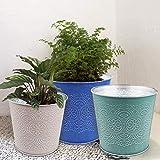 Plant Pots for Plants