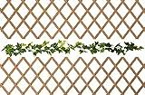 Celosia Madera Extensible Vallas De Madera Jardín Extensibles Enrejado Jardinera De Pared Único y Elegante 1 Unidad