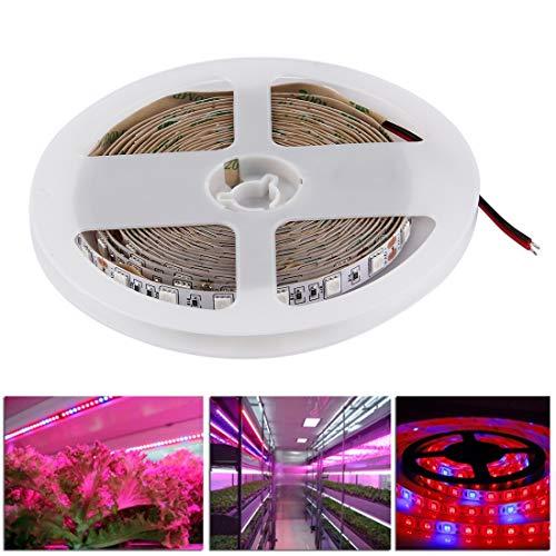 Tanxinxing 300 LEDs SMD 5050 5: 1 L'usine hydroponique de Serre d'aquarium élève la lumière de la Corde du Panneau, 60 LED/m, Longueur: 5 m, CC 12V