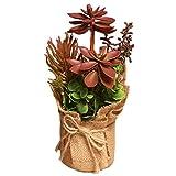 Drawihi - Flores en maceta de flores artificiales rojas suculentas de cactus suculentas decoran el hogar