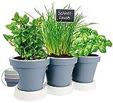 Pilix Maceta para hierbas de cocina, 2 piezas, para jardín de hierbas y balcón, de plástico, para colocar en la ventana