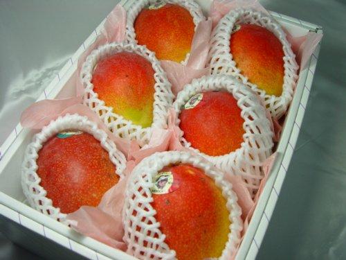父の日ギフト メキシコ産 アップルマンゴー 6個 ( 1個400g〜450g ) 化粧箱入り+黄色い薔薇 【6月17日〜6月20日の間のいずれかの日お届け】