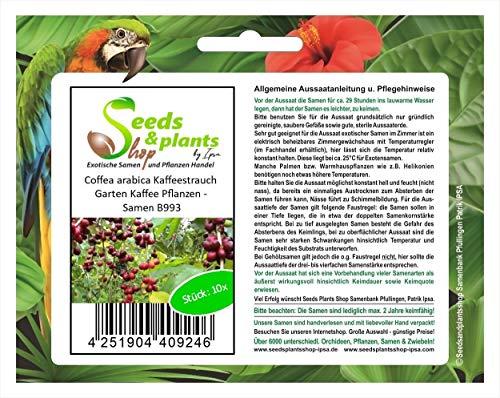Stk - 10x Coffea arabica Kaffeestrauch Garten Kaffee Pflanzen - Samen B993 - Seeds Plants Shop Samenbank Pfullingen Patrik Ipsa