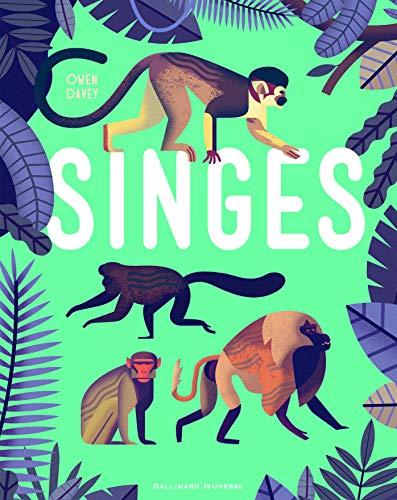 Singes - Album documentaire - De 6 à 9 ans