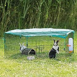 Small Rabbit Runs