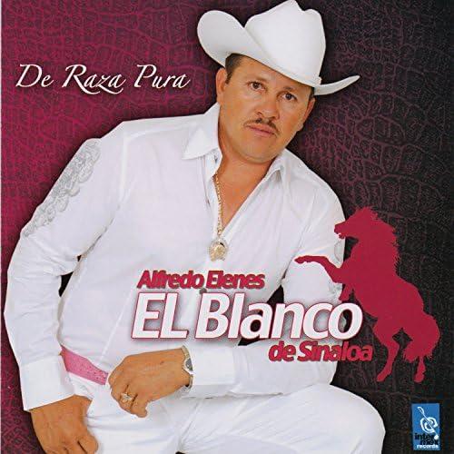 Alfredo Elenes El Blanco De Sinaloa