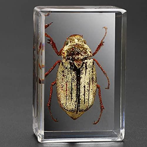 WXXT Espécimen de Insecto de Resina Transparente,spécimen de Escarabajo araña escorpión,educación en Ciencias Naturales para niños,colección de muestras(Varias Opciones de Estilo)