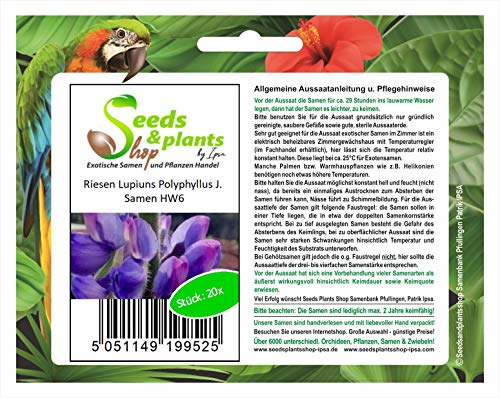 Stk - 20x Riesen Lupiuns Polyphyllus J. Blumen Pflanzen - Samen HW6 - Seeds Plants Shop Samenbank Pfullingen Patrik Ipsa
