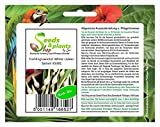 Pezzi - 30x Cipollotto White Lisbona - Cipolle Seme Verdure Giardino KS381 - Seeds Plants Shop Samenbank Pfullingen Patrik Ipsa
