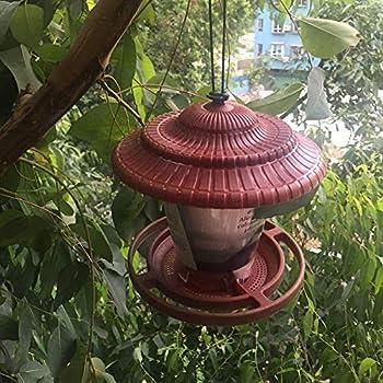 Delaman Conteneur d'alimentation d'oiseaux Hanging Bird Seeds Feed Outil d'alimentation des Oiseaux Garden Outdoor Supplies