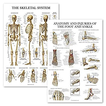 Best anatomy of the foot Reviews