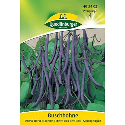 Buschbohne, Purple Teepee