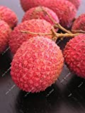 Litchi Subtropicales fruta fresca de temporada 10 semillas de bricolaje de jardín Bonsai Caramelo...