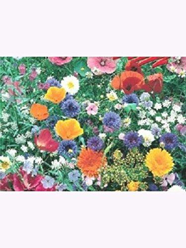 Blumenmischung, Wiesenblumen und Kräuter, Inhalt: 1kg für bis zu 1000m², mehrjährig, Höhe: 30-70 cm, Futterpflanzen für Bienen, Hummeln, Schmetterlinge usw, Profi-Blumenwiese