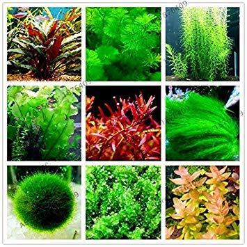 6: 100pcs / Sac Mix Aquarium Plantes graines d'herbe en Eau Aquatique Graines Accueil Gar