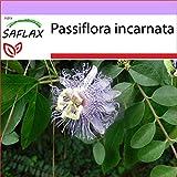 SAFLAX - Flores de la pasión - 5 semillas - Passiflora inca
