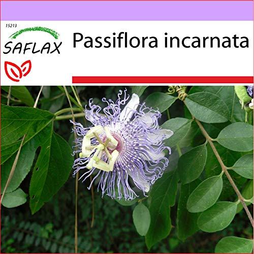 SAFLAX - Heilpflanzen - Passionsblume - 5 Samen - Passiflora incarnata