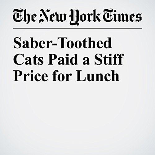 Saber-Toothed Cats Paid a Stiff Price for Lunch copertina