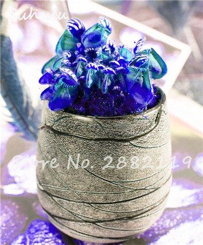 60 Pcs vivaces Nepenthes Seeds Carnivores Venus Fly Trap plus chaud du monde des plantes Graines Bonsai Garden Seed Color Mix Livraison gratuite 10