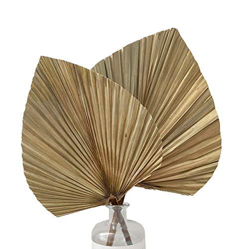 Livslyst 3X Palmenblatt Palmenblätter natürlich getrocknet Trockenblumen Deko Strauß Dekoration, Inneneinrichtung, Interior, Boho-chic ca. 38x25cm (beige/Hellbraun)