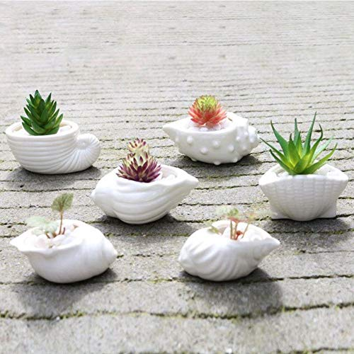 Houer 6 Stuks Mini Witte Kleine Bloempot Schelp Vorm Keramische Vetplant Pannenhouder Fairy Garden Cactus Bloempotten Plant, Wit
